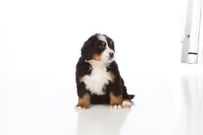 2013-Pearson Pups-Jun02-0218