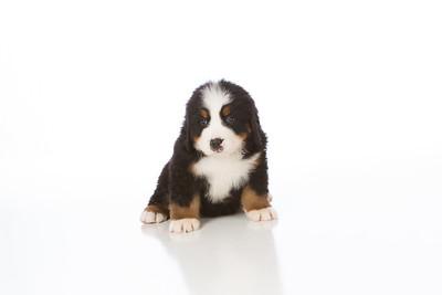 2013-Pearson Pups-Jun02-0265