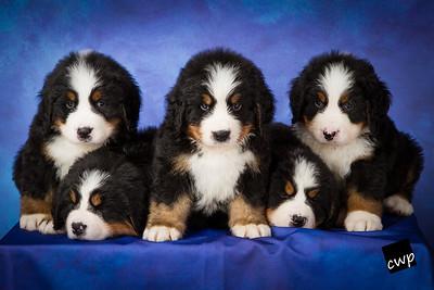 2013-Pearson Pups-Jun02-0315