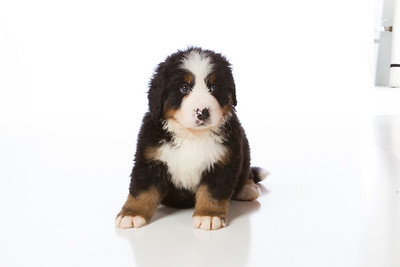 2013-Pearson Pups-Jun02-0222