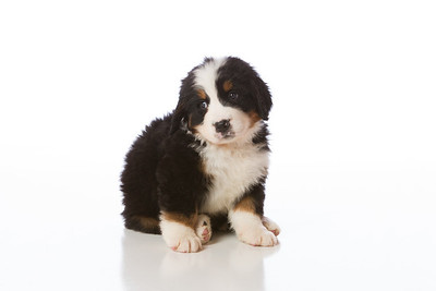 2013-Pearson Pups-Jun02-0247
