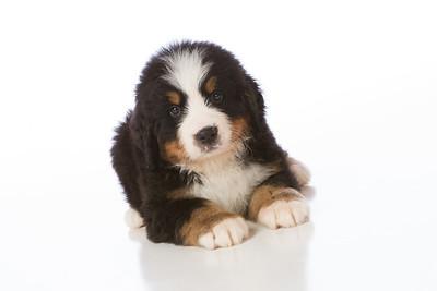 2013-Pearson Pups-Jun02-0243