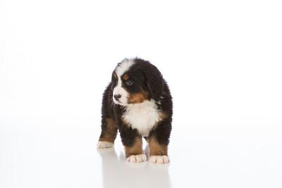 2013-Pearson Pups-Jun02-0231