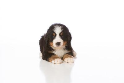 2013-Pearson Pups-Jun02-0240