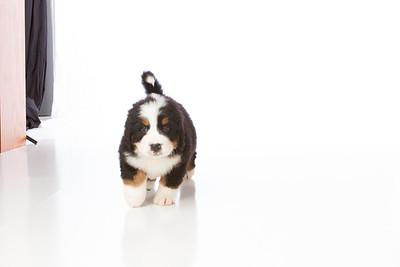 2013-Pearson Pups-Jun02-0251