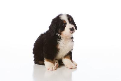 2013-Pearson Pups-Jun02-0246