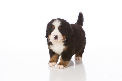 2013-Pearson Pups-Jun02-0224
