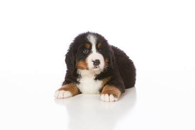 2013-Pearson Pups-Jun02-0254