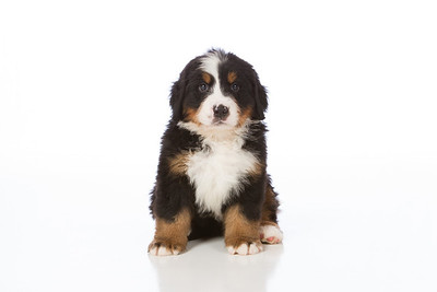 2013-Pearson Pups-Jun02-0220