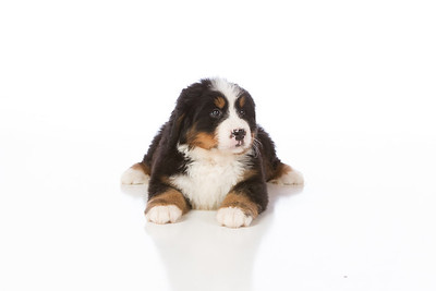 2013-Pearson Pups-Jun02-0233
