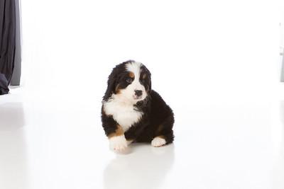 2013-Pearson Pups-Jun02-0248