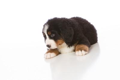 2013-Pearson Pups-Jun02-0257