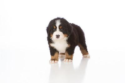 2013-Pearson Pups-Jun02-0270