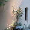Low voltage landscape lighting with potted plants Design & installed by Sacred Space Garden Design