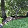 Marathon lawn <br /> Boulders, garden & tire swing<br /> Design & built by Sacred Space Garden Design