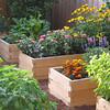 Prefabricated Cedar raised beds