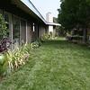 Marathon lawn<br /> Potted Fruit tree<br /> Raised veggie boxes in background<br /> Garden beds<br /> Design & built by Sacred Space Garden Design