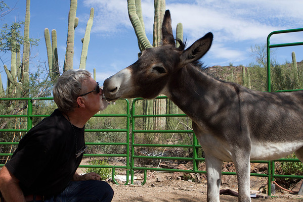 Bob Smith and Catalon the donkey. Tucson, Arizona USA