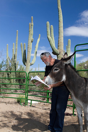 training lesson. Bob Smith and Catalon the donkey. Tucson, Arizona USA