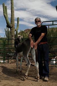 Bob Smith and Catalon the donkey. Tucson, Arizona USA