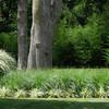 Grasses - miscellaneous