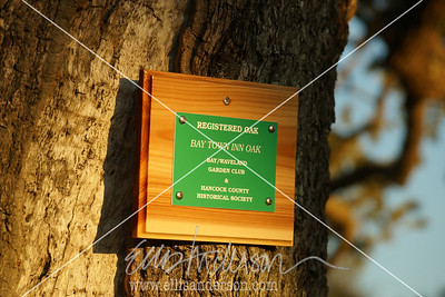 Bay Town Inn tree plaque 3366