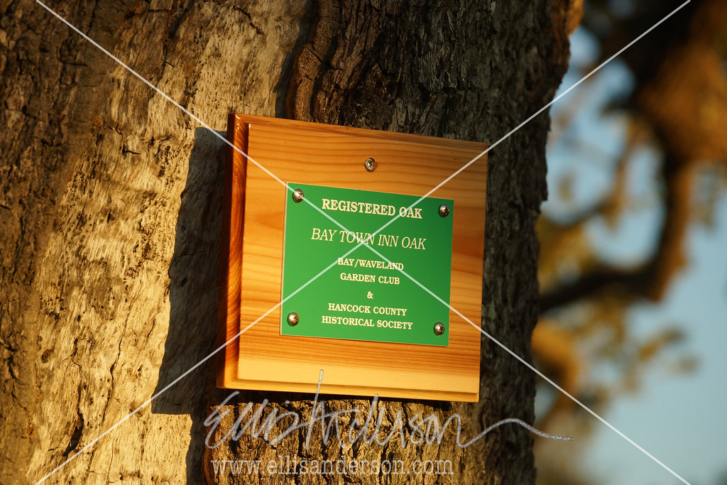 Bay Town Inn tree plaque 3366