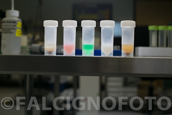 FalcignoFoto-MCR-HiRes-0831