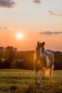 cheval  Chez Lombard