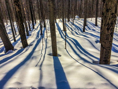 ski de fond sentiers  parc des sommets  C 1