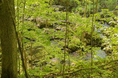 ruisseau Beaver Meadows