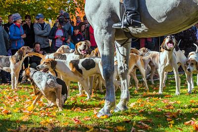 Club de chasse à courre de Montréal automne  couleurs