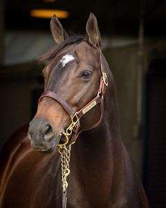 Untouched Talent and Arch's Gal Edith at Fasig Tipton 11.05.2012