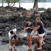 WAL_Hilo_2013_11_07_JLH_1110_low_res