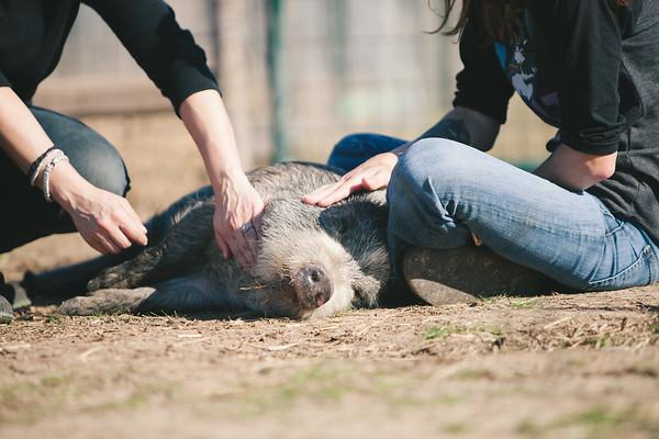 Piggy Visit 01-21-2017