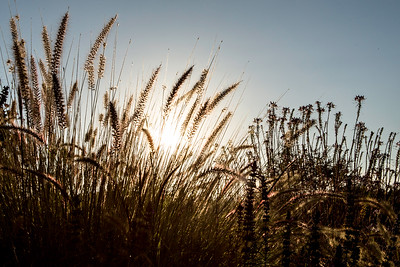 Chaminade Resort and Spa Farm to table wine dinner - September 2014-17