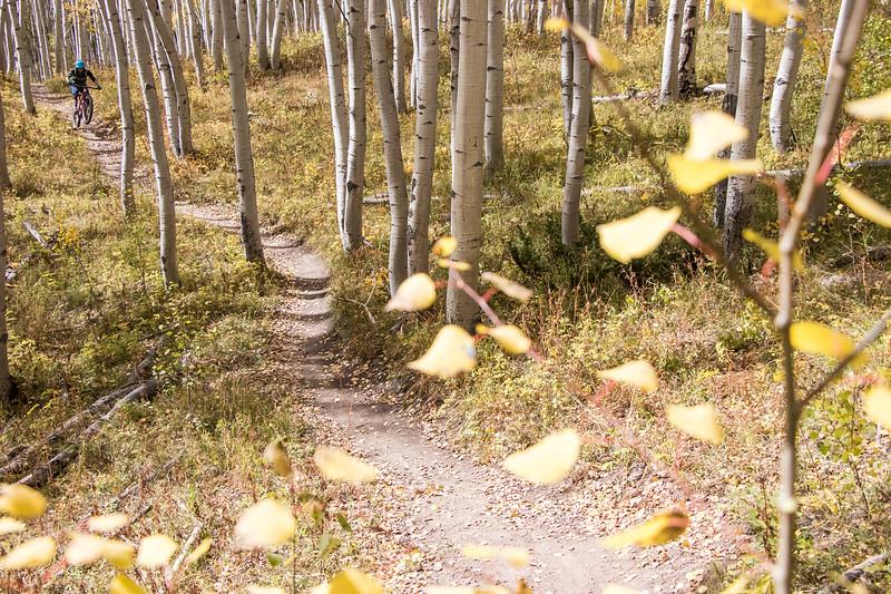 IMAGE: https://photos.smugmug.com/Clients/Chasing-Epic-Crested-Butte-Fall-Trip-Sept-17/i-sGgNvtr/0/48075922/L/CBFall17-2-L.jpg