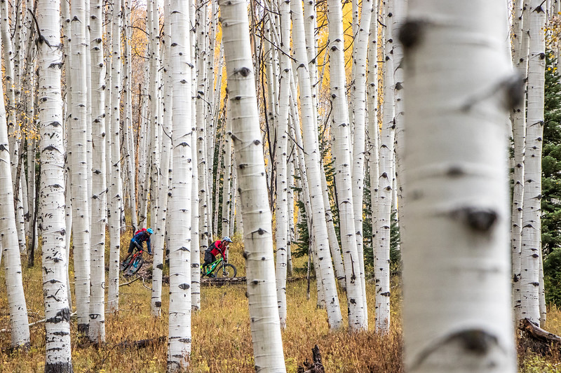 IMAGE: https://photos.smugmug.com/Clients/Chasing-Epic-Crested-Butte-w-Singletrack-Sampler-Oct-17/i-ddMznXC/0/b52f811e/L/CBFall17STS-57-L.jpg