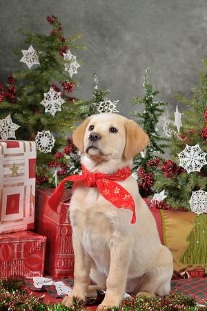 Christmas Pets 2011