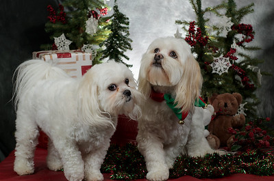 Christmas Pets at Black Lake Nursery and Feed