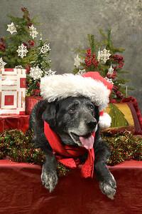 Christmas Pets at Black Lake Nursery and Feed