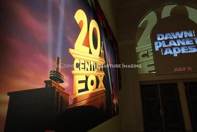 Fox Highlights