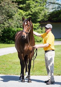 Catholic Boy at Claiborne Farm 6.02.20.