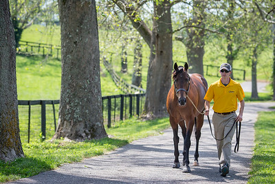 Demarchelier at Claiborne farm