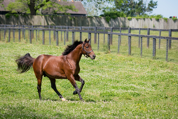 Demarchelier at Claiborne farm