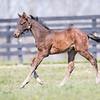 Runhappy - Miss Premura '18 colt at Drumkenny 4/11/18. Born 2/17/18.