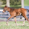 Runhappy - Desire To Excel '18 at Burleson Farms 3.31.18