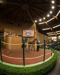 Runhappy - Minds Eyes '18 colt sells at Keeneland 11.06.18.