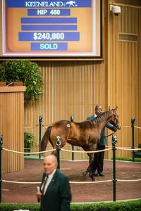 Runhappy - Minds Eyes '18 colt sells at Keeneland 11.06.18.