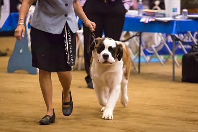 Nana's first dog show!